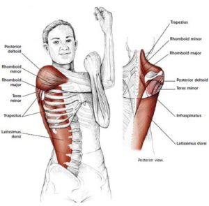 BENT-ARM-SHOULDER-STRETCH